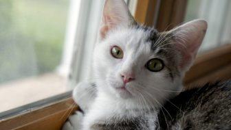 Annie kitten