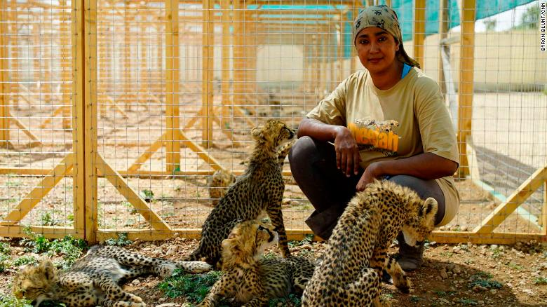 Cheetahs Extinct in Two Years?  Smuggling the Cause