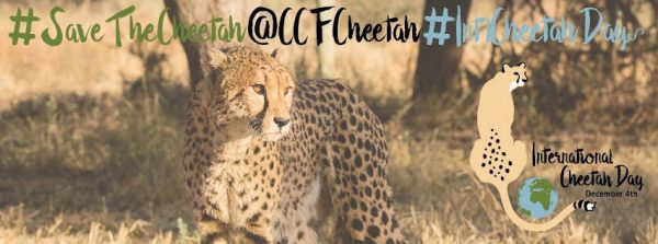 Save The Cheetah Banner