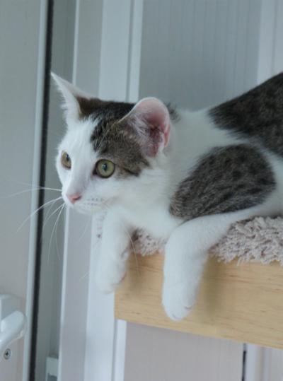 Cat is like a little leopard