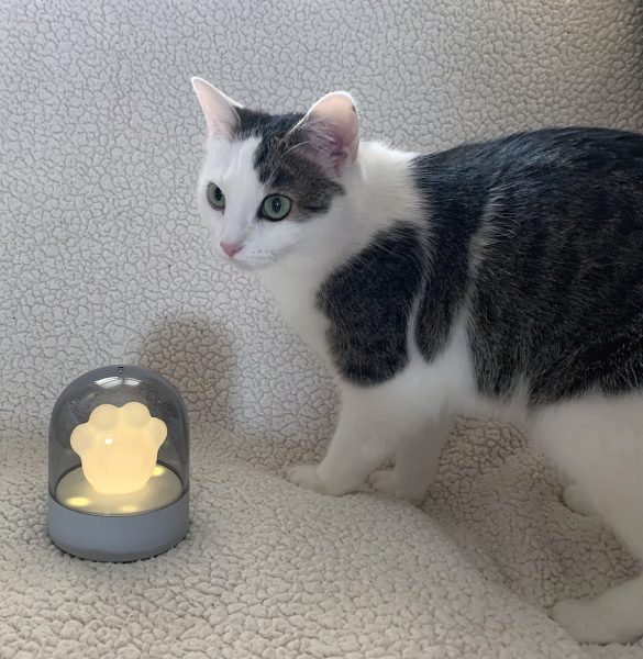 Annie with the Cat Paw Night Light