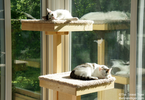 Cat Tower Satisfies Cat Natural Instinct to Climb