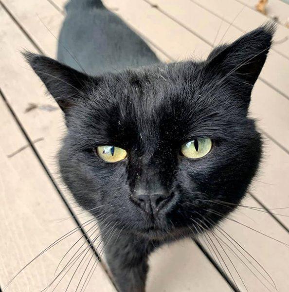 Bob our outdoor black cat friend