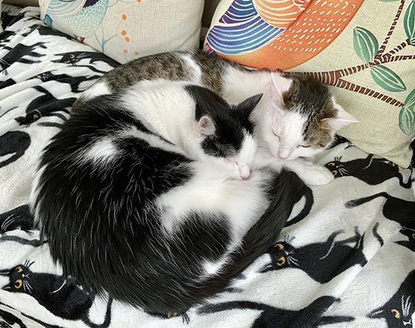Annie and Eddie snuggled together