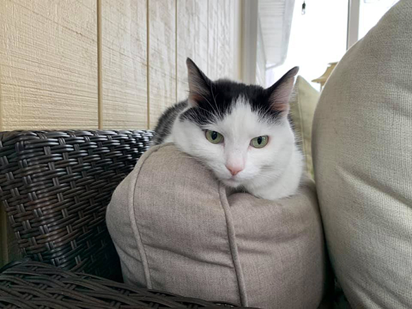 Eddie on back of sofa