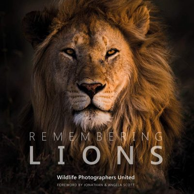 World Lion Day | Remembering Lions Giveaway