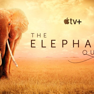 World Elephant Day! Watch The Elephant Queen