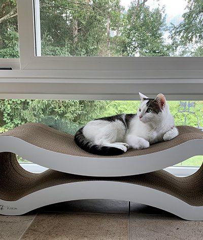 Annie on new cat scratcher