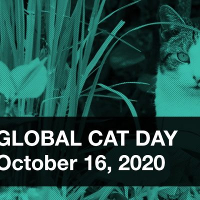 Alley Cat Allies Global Cat Day. Take The Pledge