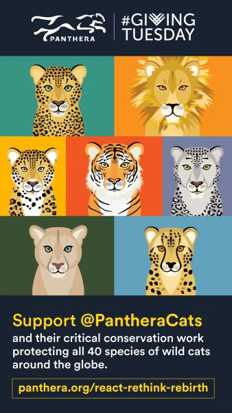 Panthera.org. Wildcat Ambassador