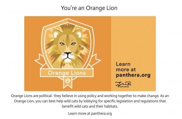 Orange Lion. Wildcat Ambassador