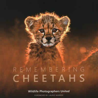 Save The Cheetah. Remembering Cheetahs Giveaway