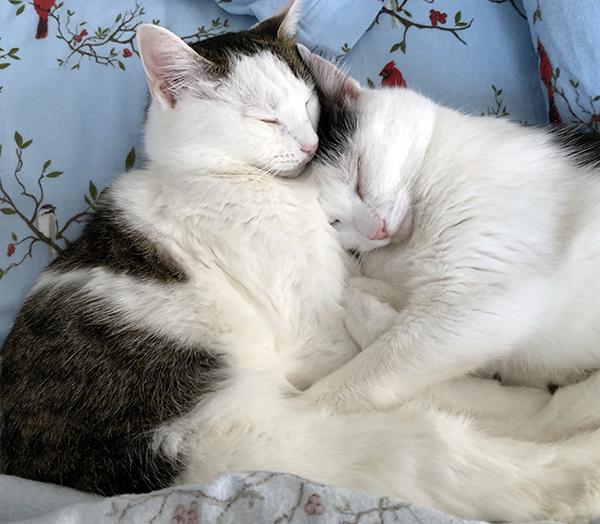 Annie and Eddie snuggling