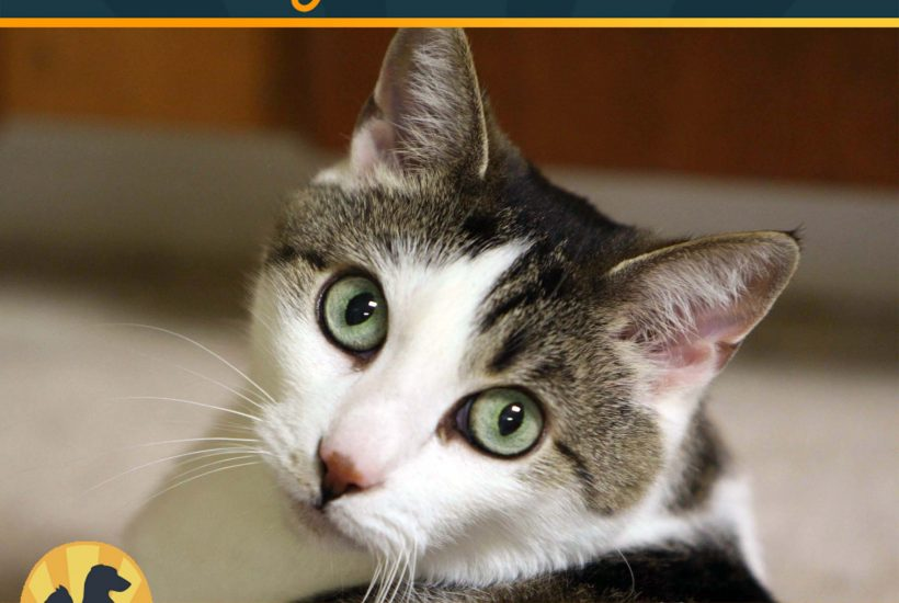 See the Light for Pet Adoption